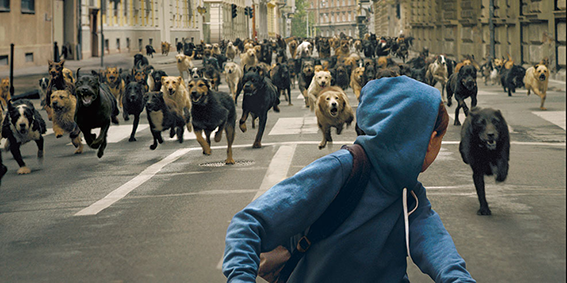 PACK: A person in a blue hoodie on a bicycle looks behind them to see hundreds of dogs chasing them through a wide, empty city street