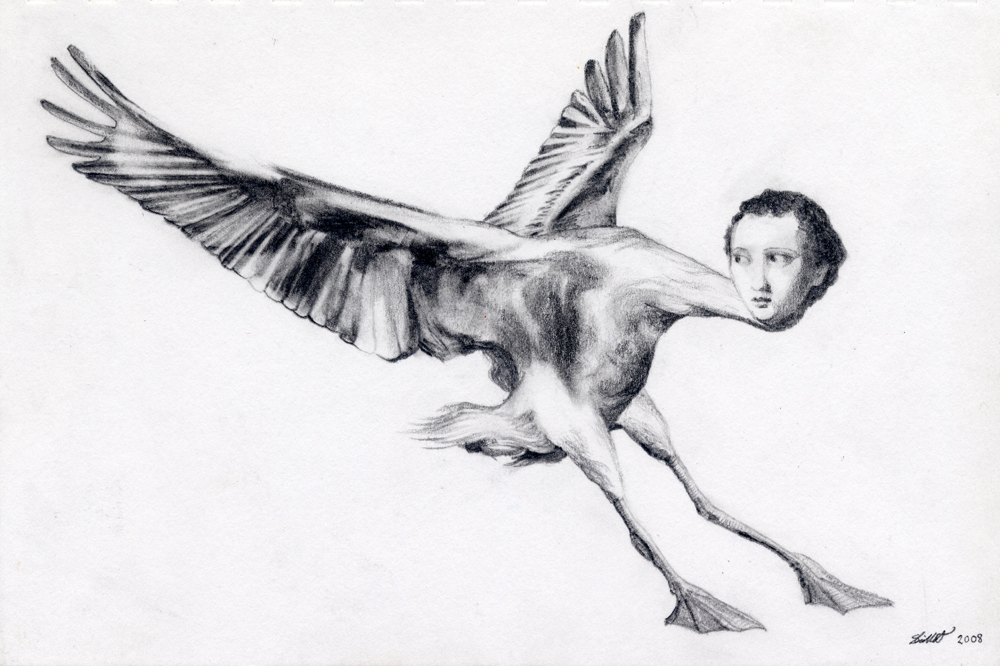 Nin: Pencil drawing of a bird woman with a long neck, her wings flapping as though she has just landed