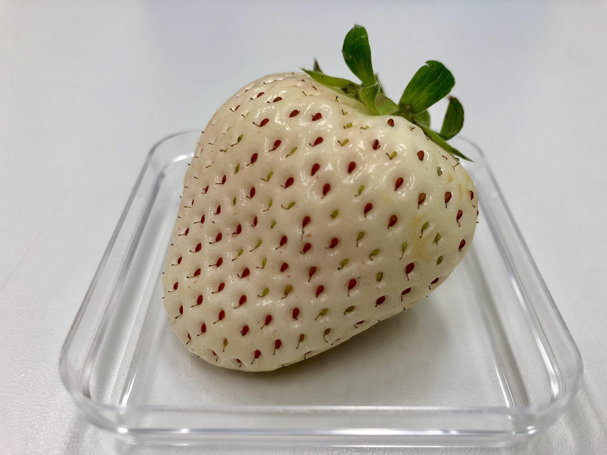 Strawberries: a white strawberry sits in a dish